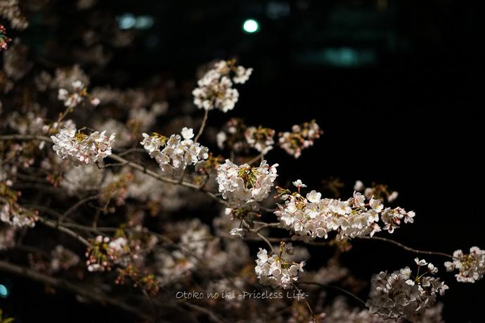 0404目黒川4月-15