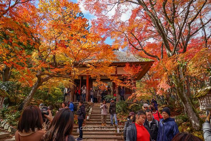 1124京都11月-9