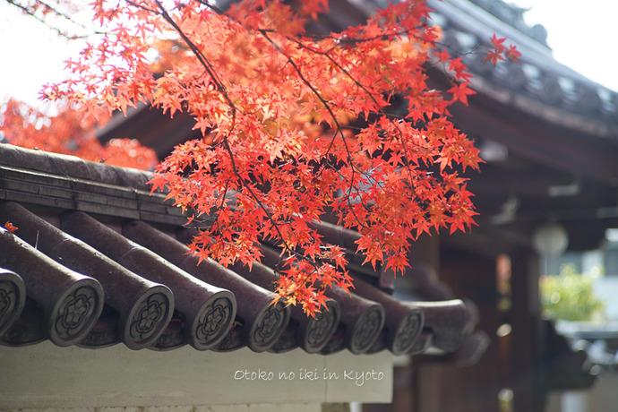 そうだ京都いこう20192019-160