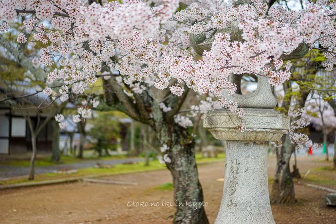 0407京都4月-94