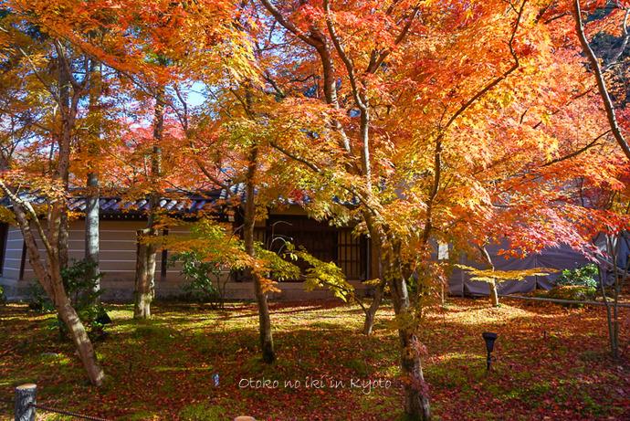 1124京都11月-19