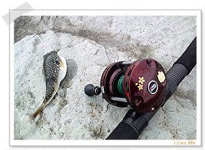 投げ釣り★彡