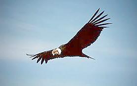 OLYMPIC オリムピック コンドル Condor vintage reel