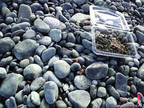 ダイワのグラスロッド 600-45