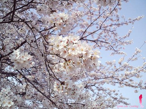 ごみ竿の 春到来♪