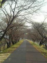 冬の桜土手☆