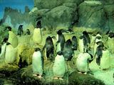皇帝ペンギンとアデリーペンギン達