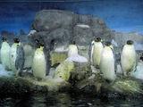 AWSの皇帝ペンギン
