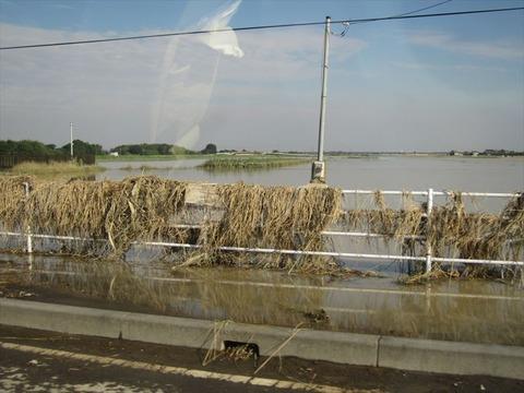 浸水した田んぼ_s