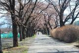 160406_sanehara-01