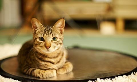 cat_room_rest-1280x768
