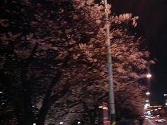 飯田橋→市ヶ谷の桜