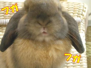 野菜食べたいよ・・・。