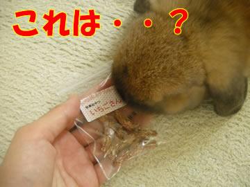 いちごさん!?