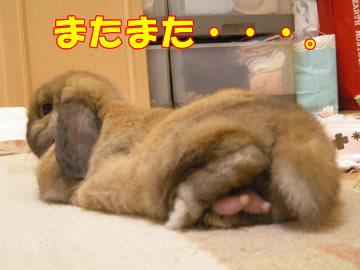 tarako登場!