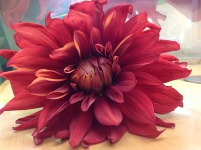 aisaちゃんから花