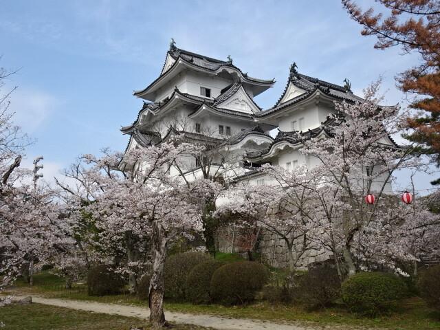 上野城と桜