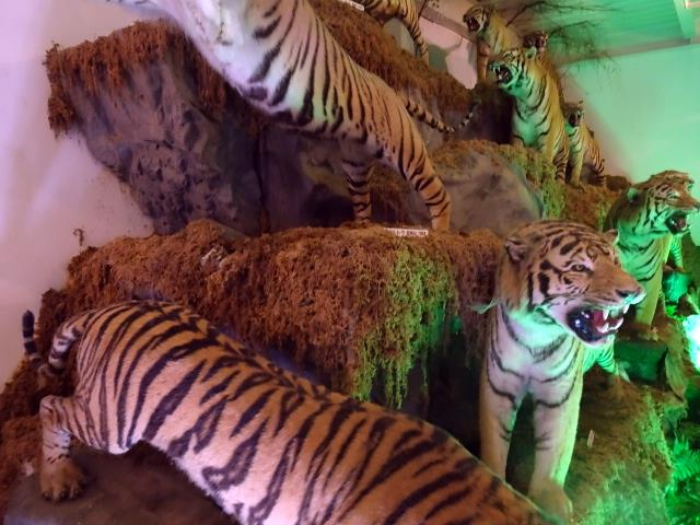 色んな種類の虎