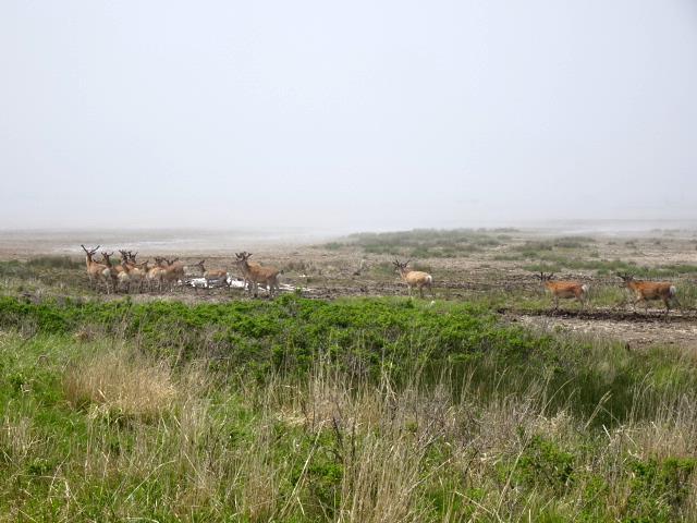雄鹿の群れ