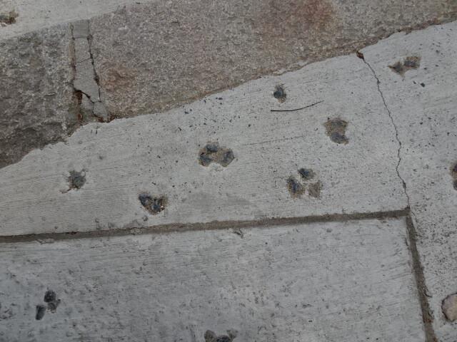 猫の足跡のつもり