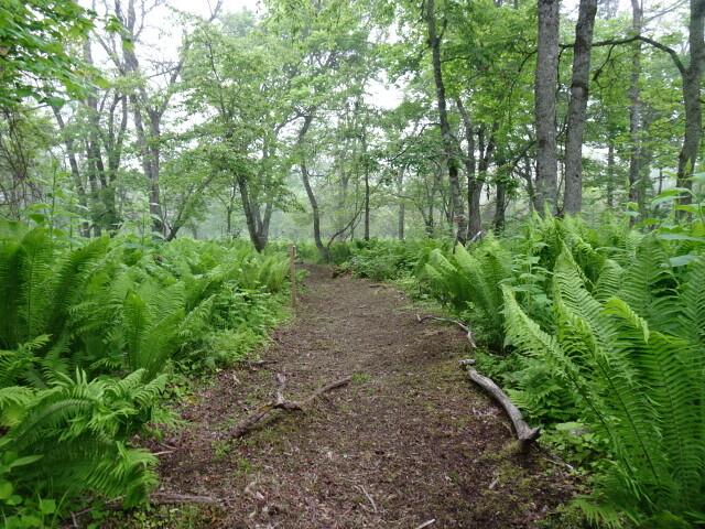 野鳥の小道