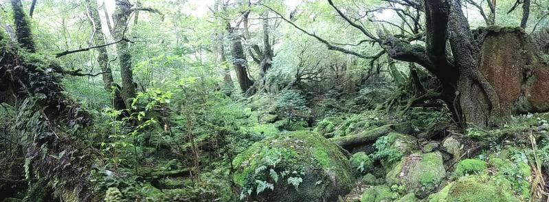 苔むす森 (2)