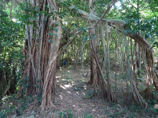 ジャングル様になっている
