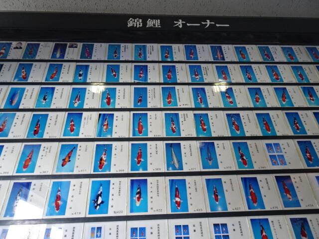 錦鯉のオーナー表