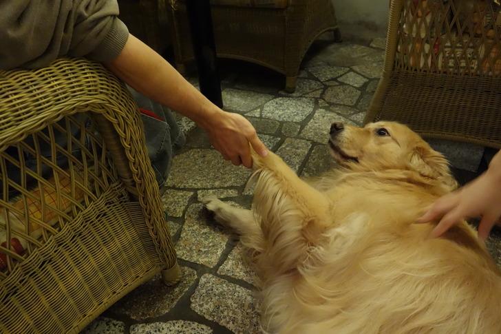長野 白馬 カフェ モンピジョン 犬
