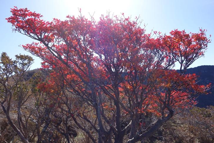 韓国岳 北壁 紅葉