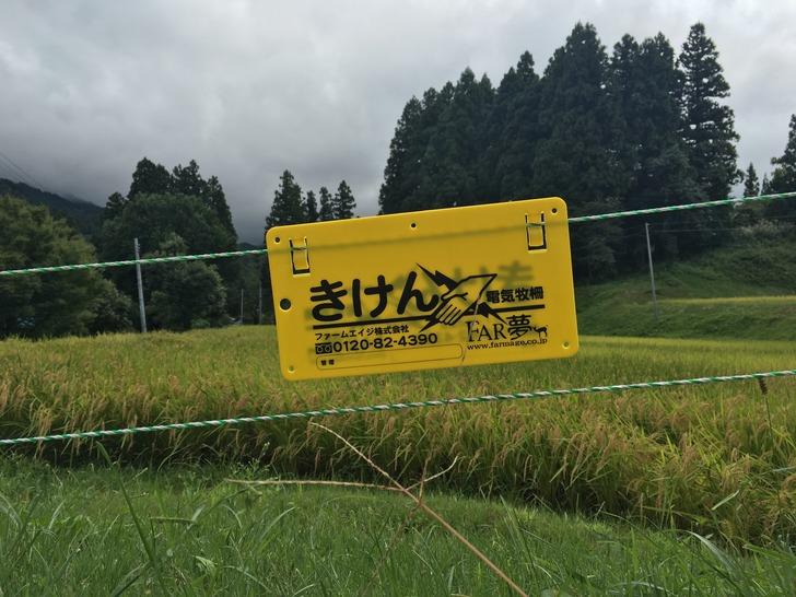 田んぼ 電気柵