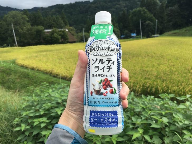 新潟 稲刈り ソルティライチ