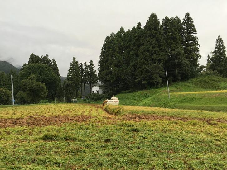 新潟 田んぼ 稲刈り コンバイン モヒカン