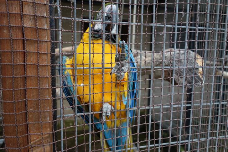 海の中道海浜公園 動物の森 ルリコンゴウインコ