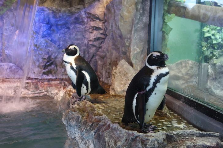 函館 アニマルカフェ ジャンゴー ペンギン