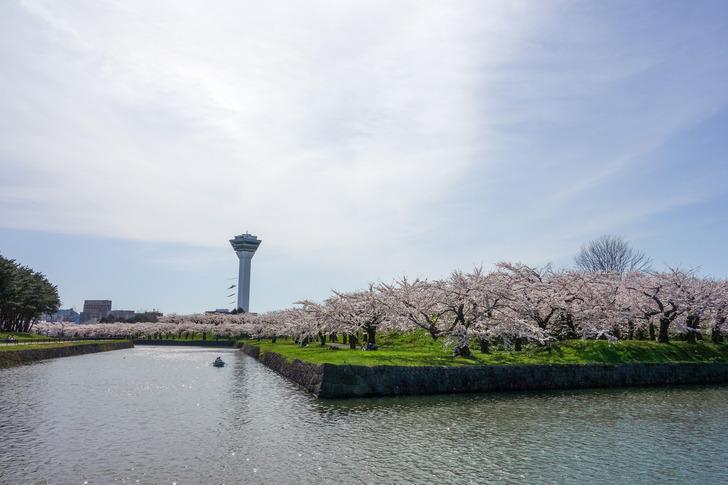 函館 五稜郭公園 桜 花見 五稜郭タワー