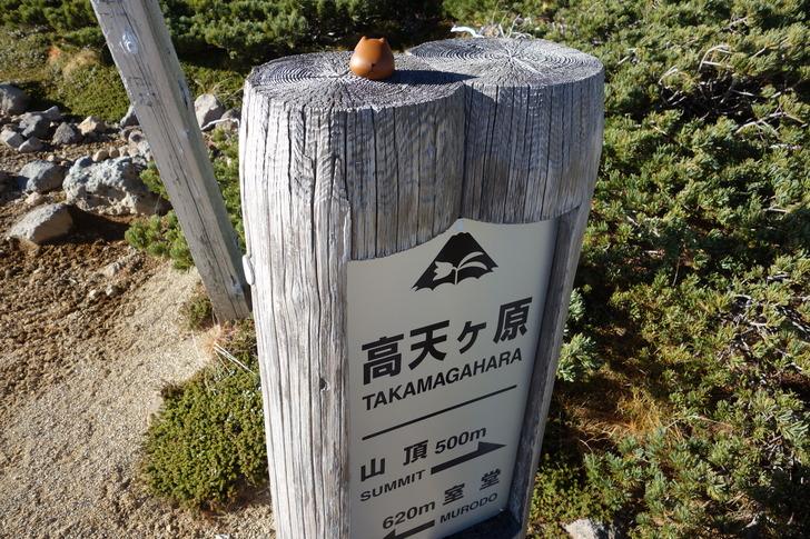 高天ヶ原 カピバラさん