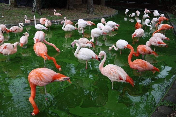 海の中道海浜公園 動物の森 フラミンゴ