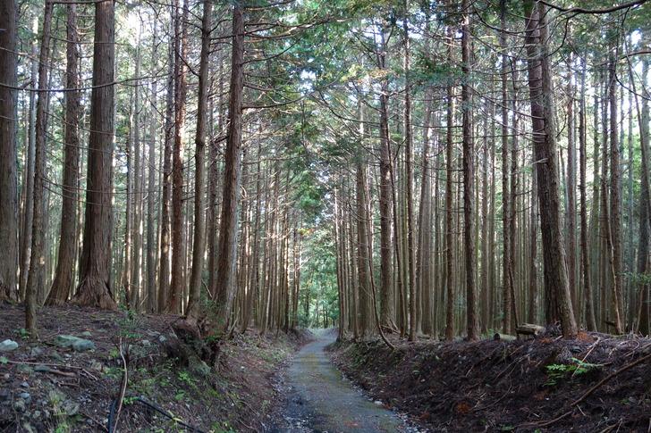 蓬莱山 林道