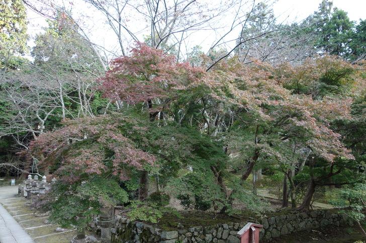 三井寺 紅葉