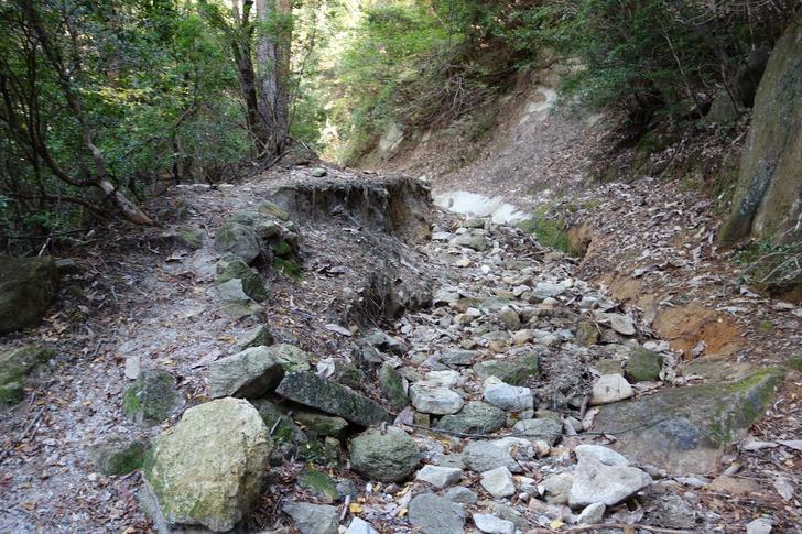 大崩山 林道