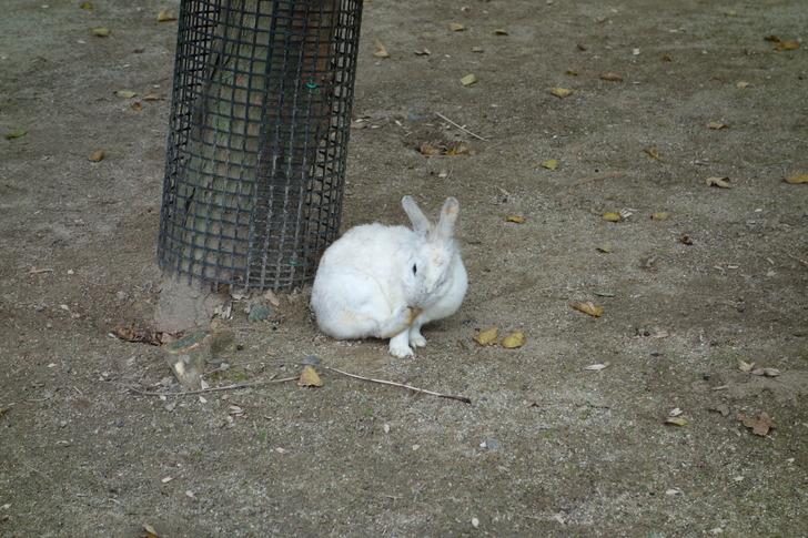 海の中道海浜公園 動物の森 ウサギ