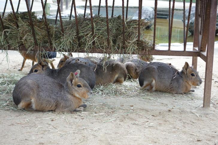 海の中道海浜公園 動物の森 マーラ