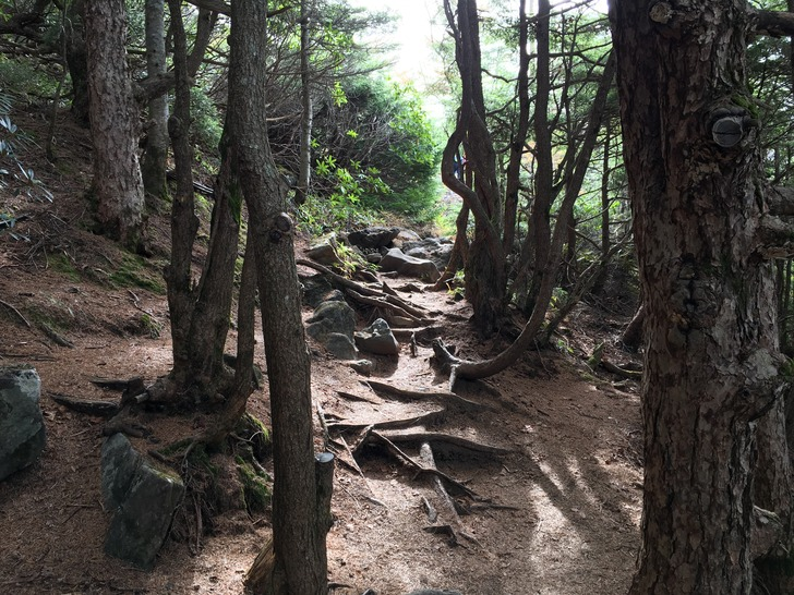 黒斑山 登山道