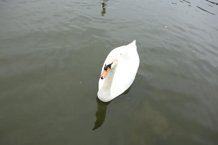 海の中道海浜公園 動物の森 白鳥