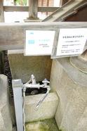 IMG_7485平野神社