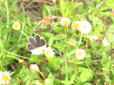IMG_7501蝶々