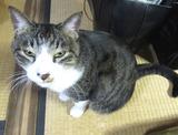 IMG_8525猫