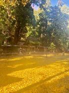 若狭彦神社、姫神社_191126_0006