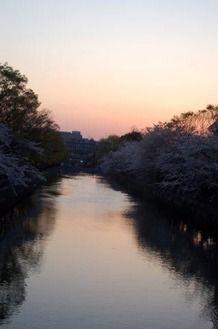 岡崎桜回廊1
